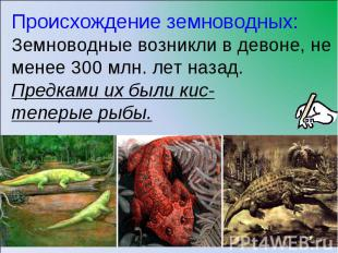 Происхождение земноводных:Земноводные возникли в девоне, не менее 300 млн. лет н