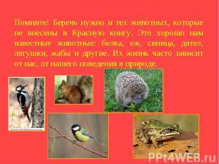 Помните! Беречь нужно и тех животных, которые не внесены в Красную книгу. Это хо