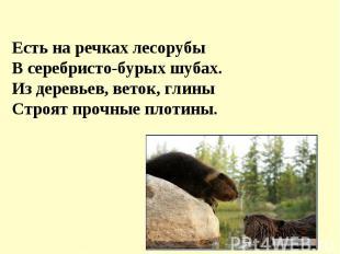 Я люблю пчелиный мед,Ягоду лесную.А мой брат во льдах живет,Рыбу ест морскую.