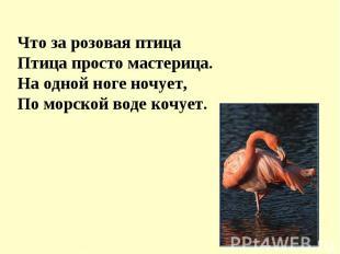 Что за розовая птицаПтица просто мастерица.На одной ноге ночует,По морской воде