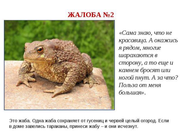 ЖАЛОБА №2«Сама знаю, что не красавица. А окажись я рядом, многие шарахаются в сторону, а то еще и камнем бросят или ногой пнут. А за что? Польза от меня большая».Это жаба. Одна жаба сохраняет от гусениц и червей целый огород. Если в доме завелись та…