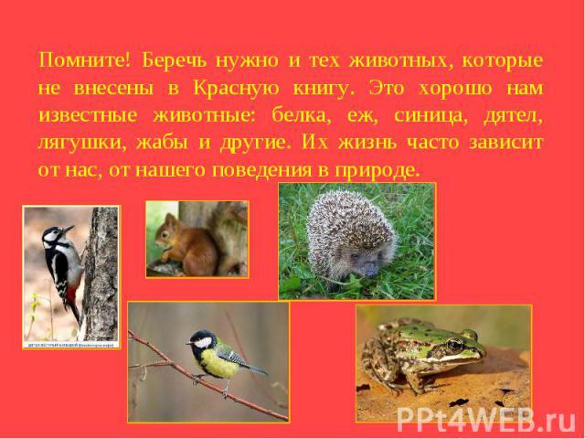 Помните! Беречь нужно и тех животных, которые не внесены в Красную книгу. Это хорошо нам известные животные: белка, еж, синица, дятел, лягушки, жабы и другие. Их жизнь часто зависит от нас, от нашего поведения в природе.