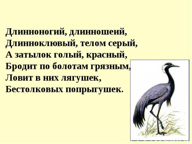 Длинноногий, длинношеий,Длинноклювый, телом серый,А затылок голый, красный,Бродит по болотам грязным,Ловит в них лягушек,Бестолковых попрыгушек.