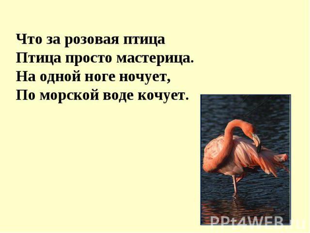 Что за розовая птицаПтица просто мастерица.На одной ноге ночует,По морской воде кочует.