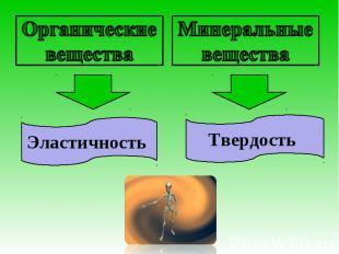 Органические веществаЭластичность Минеральные веществаТвердость