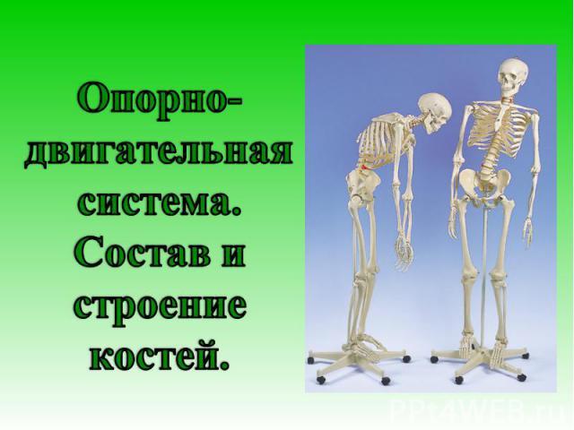 Опорно-двигательная система. Состав и строение костей
