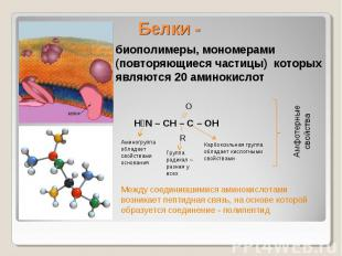 Белки - биополимеры, мономерами (повторяющиеся частицы) которых являются 20 амин
