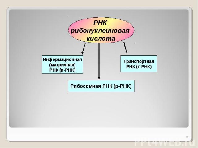 РНК рибонуклеиновая кислотаИнформационная(матричная)РНК (и-РНК)ТранспортнаяРНК (т-РНК)Рибосомная РНК (р-РНК)