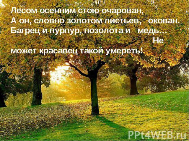 Лесом осенним стою очарован,А он, словно золотом листьев, окован.Багрец и пурпур, позолота и медь… Не может красавец такой умереть!