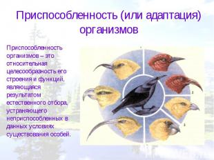 Приспособленность (или адаптация) организмовПриспособленность организмов – это о
