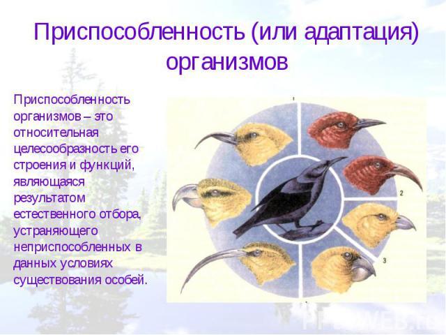 Приспособленность (или адаптация) организмовПриспособленность организмов – это относительная целесообразность его строения и функций, являющаяся результатом естественного отбора, устраняющего неприспособленных в данных условиях существования особей.