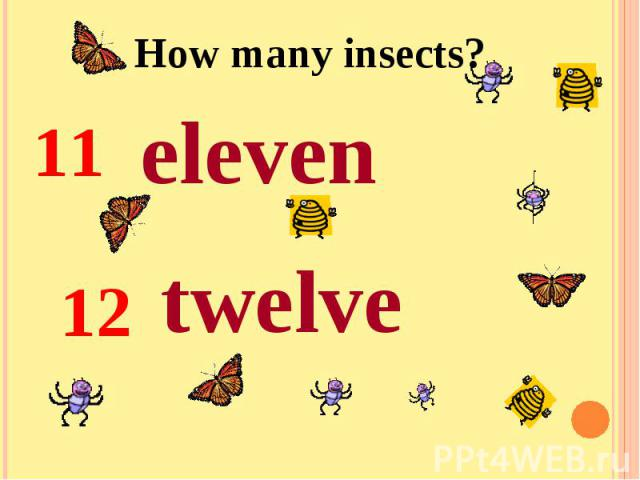 How many insects?eleventwelve