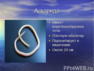 Аскарида Имеет веретенообразное телоПлотную оболочкуПаразитирует в кишечникеОкол
