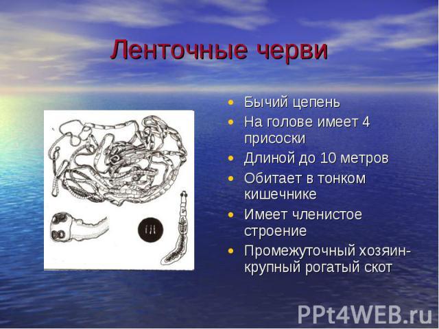 Ленточные черви Бычий цепеньНа голове имеет 4 присоскиДлиной до 10 метровОбитает в тонком кишечникеИмеет членистое строениеПромежуточный хозяин-крупный рогатый скот