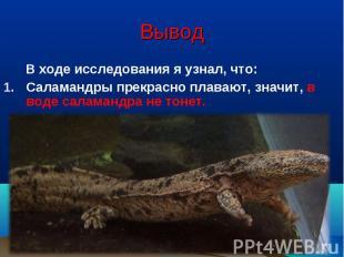 Вывод В ходе исследования я узнал, что:Саламандры прекрасно плавают, значит, в в