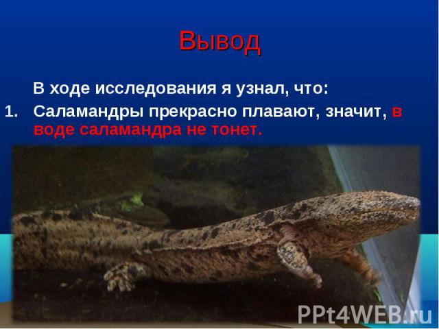 Вывод В ходе исследования я узнал, что:Саламандры прекрасно плавают, значит, в воде саламандра не тонет.