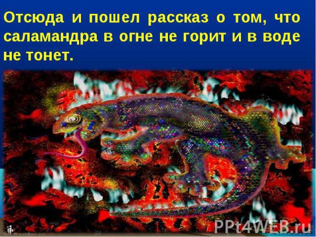 Отсюда и пошел рассказ о том, что саламандра в огне не горит и в воде не тонет.