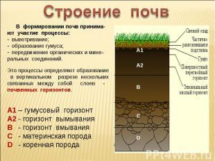 Строение почв В формировании почв принима-ют участие процессы: выветривание; обр