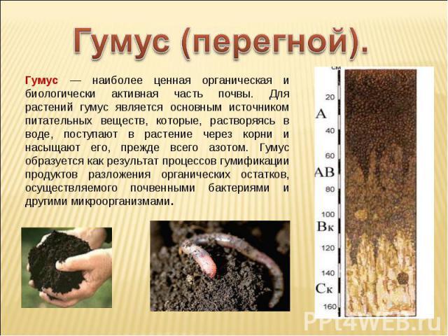 Гумус (перегной). Гумус — наиболее ценная органическая и биологически активная часть почвы. Для растений гумус является основным источником питательных веществ, которые, растворяясь в воде, поступают в растение через корни и насыщают его, прежде все…