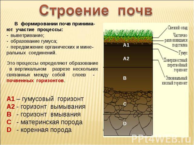 Строение почв В формировании почв принима-ют участие процессы: выветривание; образование гумуса; передвижение органических и мине-ральных соединений.Это процессы определяют образование в вертикальном разрезе нескольких связанных между собой слоев - …