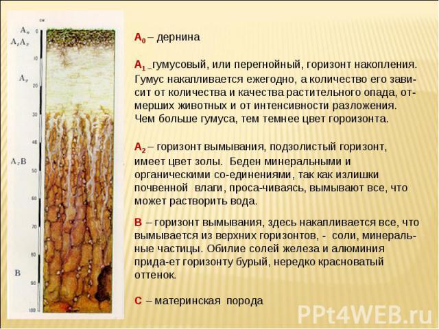 А0 – дернина А1 – гумусовый, или перегнойный, горизонт накопления. Гумус накапливается ежегодно, а количество его зави-сит от количества и качества растительного опада, от-мерших животных и от интенсивности разложения. Чем больше гумуса, тем темнее …