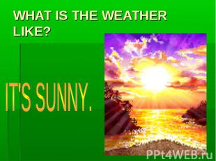 WHAT IS THE WEATHER LIKE? IT'S SUNNY.