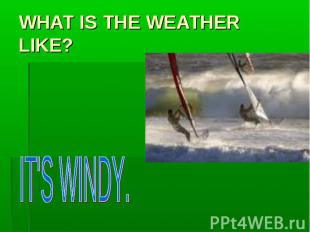 WHAT IS THE WEATHER LIKE? IT'S WINDY.