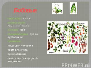 Бобовые Число видов – 12 тысФормула цветка: Ч(5)Л1+2+(2)Т(9)+1П1 Тип плода – боб