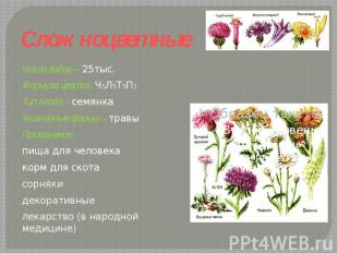 Сложноцветные Число видов – 25тыс.Формула цветка: Ч5Л5Т5П1 Тип плода – семянкаЖи