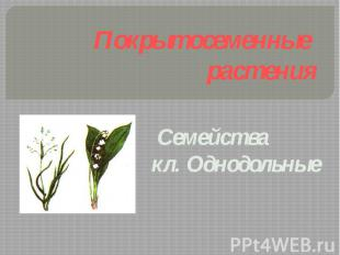 Покрытосеменные растения Семейства кл. Однодольные