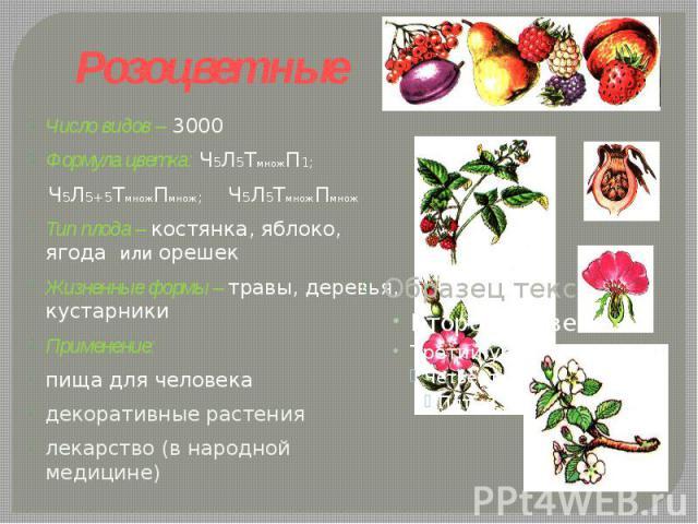 Розоцветные Число видов – 3000Формула цветка: Ч5Л5ТмножП1; Ч5Л5+5ТмножПмнож; Ч5Л5ТмножПмножТип плода – костянка, яблоко, ягода или орешекЖизненные формы – травы, деревья, кустарники Применение: пища для человекадекоративные растениялекарство (в наро…
