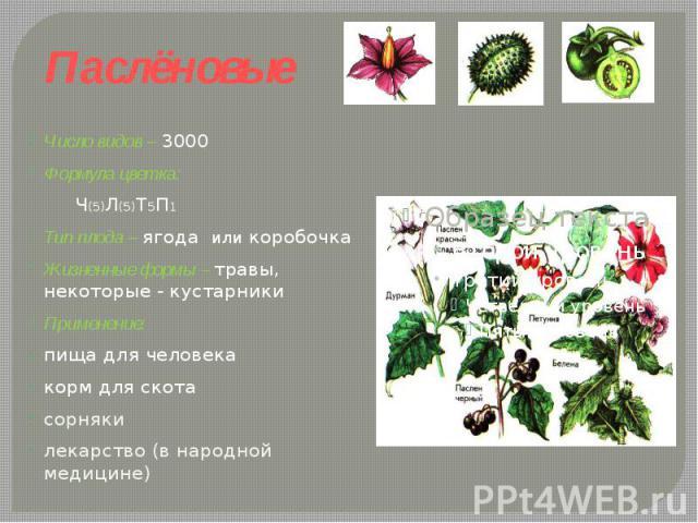 Паслёновые Число видов – 3000Формула цветка: Ч(5)Л(5)Т5П1 Тип плода – ягода или коробочкаЖизненные формы – травы, некоторые - кустарники Применение: пища для человекакорм для скотасорнякилекарство (в народной медицине)