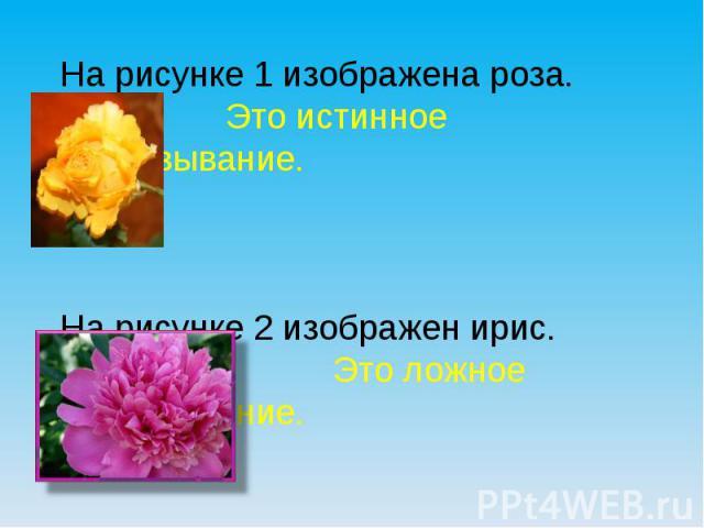 На рисунке 1 изображена роза. Это истинное высказывание.На рисунке 2 изображен ирис. Это ложное высказывание.