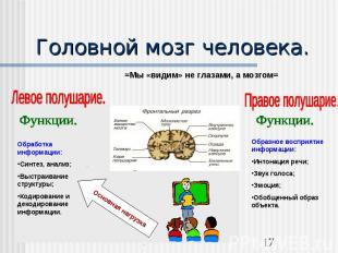 Головной мозг человека.Обработка информации:Синтез, анализ;Выстраивание структур