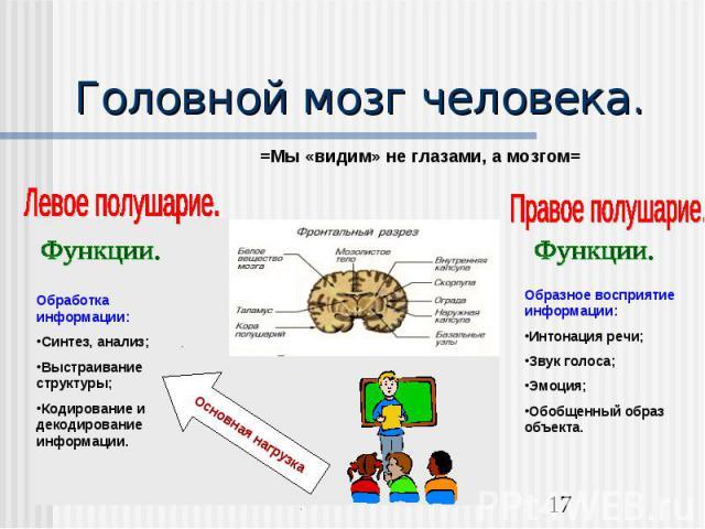 Головной мозг человека.Обработка информации:Синтез, анализ;Выстраивание структуры;Кодирование и декодирование информации.Образное восприятие информации:Интонация речи;Звук голоса;Эмоция;Обобщенный образ объекта.