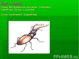 Жук – оленьОтряд: Жесткокрылые, или Жуки - Coleoptera Семействo: Рогачи - Lucani