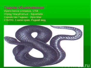 Гадюка обыкновеннаяVipera berus Linnaeus, 1758 Отряд Чешуйчатые - Squamata Семей