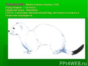 Горностай - Martes erminea Linnaeus, 1758 Отряд Хищные — Carnivora Семейство Кун