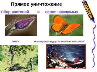 Прямое уничтожениеСбор растений и ловля насекомых Охота Ловля рыбы и других морс