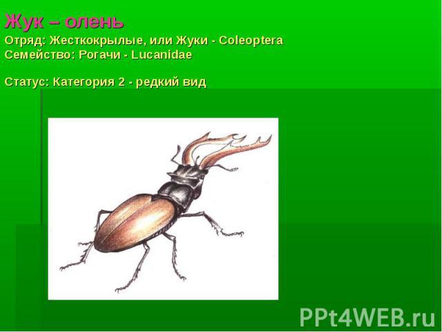 Жук – оленьОтряд: Жесткокрылые, или Жуки - Coleoptera Семействo: Рогачи - Lucanidae Статус: Категория 2 - редкий вид