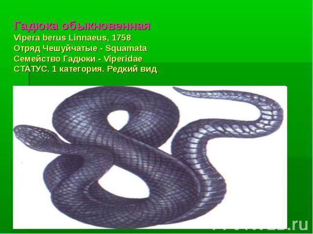 Гадюка обыкновеннаяVipera berus Linnaeus, 1758 Отряд Чешуйчатые - Squamata Семейство Гадюки - Viperidae СТАТУС. 1 категория. Редкий вид