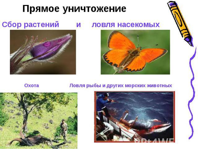Прямое уничтожениеСбор растений и ловля насекомых Охота Ловля рыбы и других морских животных