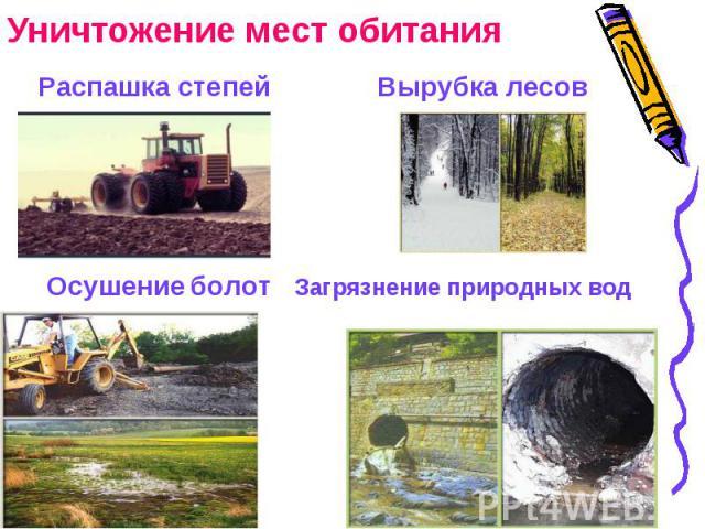 Уничтожение мест обитания Распашка степей Вырубка лесовОсушение болот Загрязнение природных вод