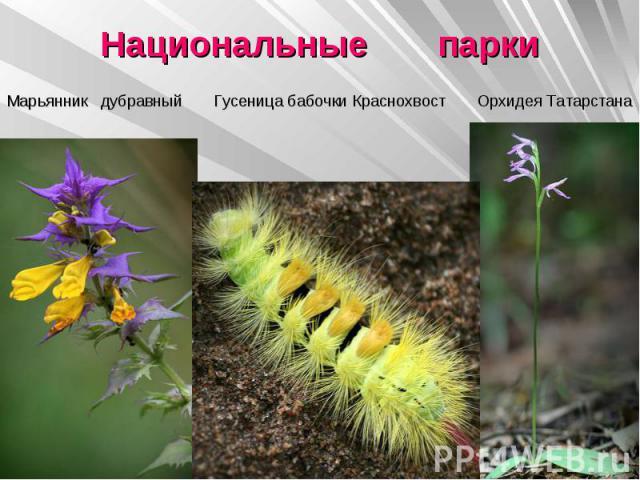 Национальные парки Марьянник дубравный Гусеница бабочки Краснохвост Орхидея Татарстана