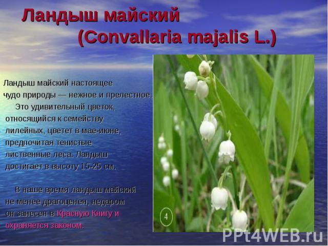 Ландыш майский (Convallaria majalis L.) Ландыш майский настоящее чудо природы — нежное и прелестное. Это удивительный цветок, относящийся к семейству лилейных, цветет в мае-июне, предпочитая тенистые лиственные леса. Ландыш достигает в высоту 15-25 …