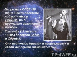 Вторыми в СССР (28 июня 1960г.) полетели собаки Чайка и Лисичка, но в результате