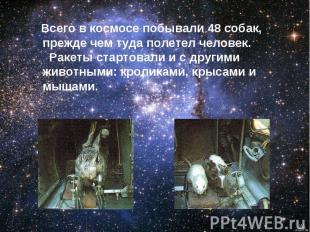 Всего в космосе побывали 48 собак, прежде чем туда полетел человек. Ракеты старт