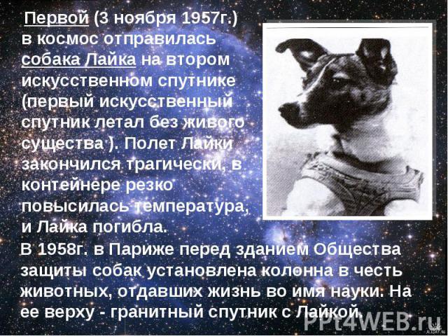 Первой (3 ноября 1957г.) в космос отправилась собака Лайка на втором искусственном спутнике (первый искусственный спутник летал без живого существа ). Полет Лайки закончился трагически, в контейнере резко повысилась температура, и Лайка погибла. В 1…