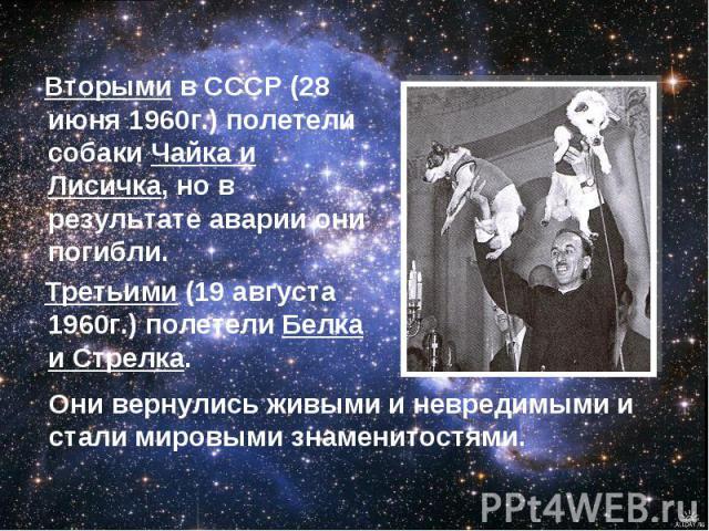 Вторыми в СССР (28 июня 1960г.) полетели собаки Чайка и Лисичка, но в результате аварии они погибли. Третьими (19 августа 1960г.) полетели Белка и Стрелка. Они вернулись живыми и невредимыми и стали мировыми знаменитостями.