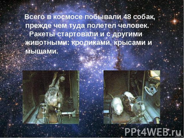 Всего в космосе побывали 48 собак, прежде чем туда полетел человек. Ракеты стартовали и с другими животными: кроликами, крысами и мышами.